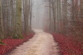 Autumn view of misty forest autumn nature. Autumn road in dense fog - foggy autumn landscape with bare autumn trees and orange fallen leaves. Lane of trees during a foggy morning in early autumn. Soft focus applied