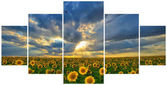 Summer landscape: Multi frame photos with beauty sunset over sunflowers field