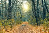 Mysterious forest in the evening after rain. Picturesque autumn nature. Goodbye autumn. Cold November landscape. Path in the forest with yellow autumn leaves.