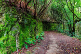 Path in tropical forest in Spain
