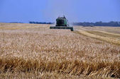 Harvesting of barley in agricultural farm POLIVTSI_2