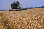 Harvesting of barley in agricultural farm POLIVTSI