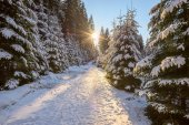 Sun is setting over road in coniferous forest