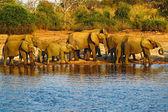 Elefántok ivóvíz