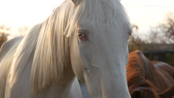 Group of horses. white horse