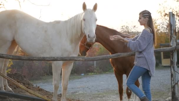 Fiatal nő vigyázni a ló
