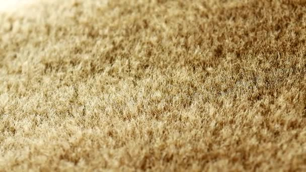 Synthetic fur background A fake fur material backdrop in true macro close up with a sliding camera move.