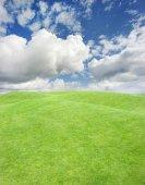 hladké zelené trávy