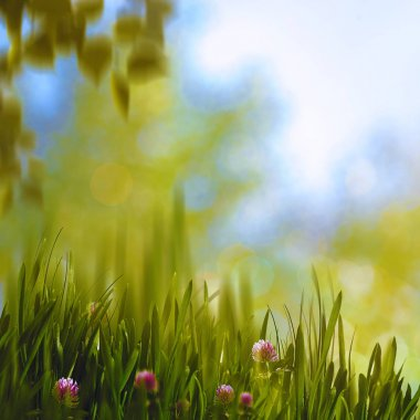 Clower and grass, abstract summer background