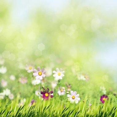 Beauty summer meadow