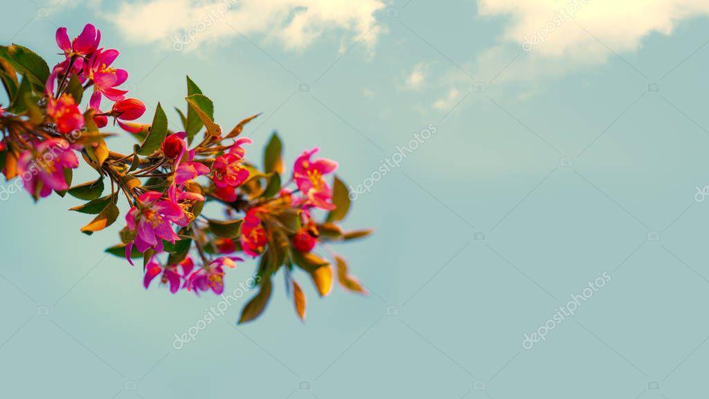 Alone twig against summer skies