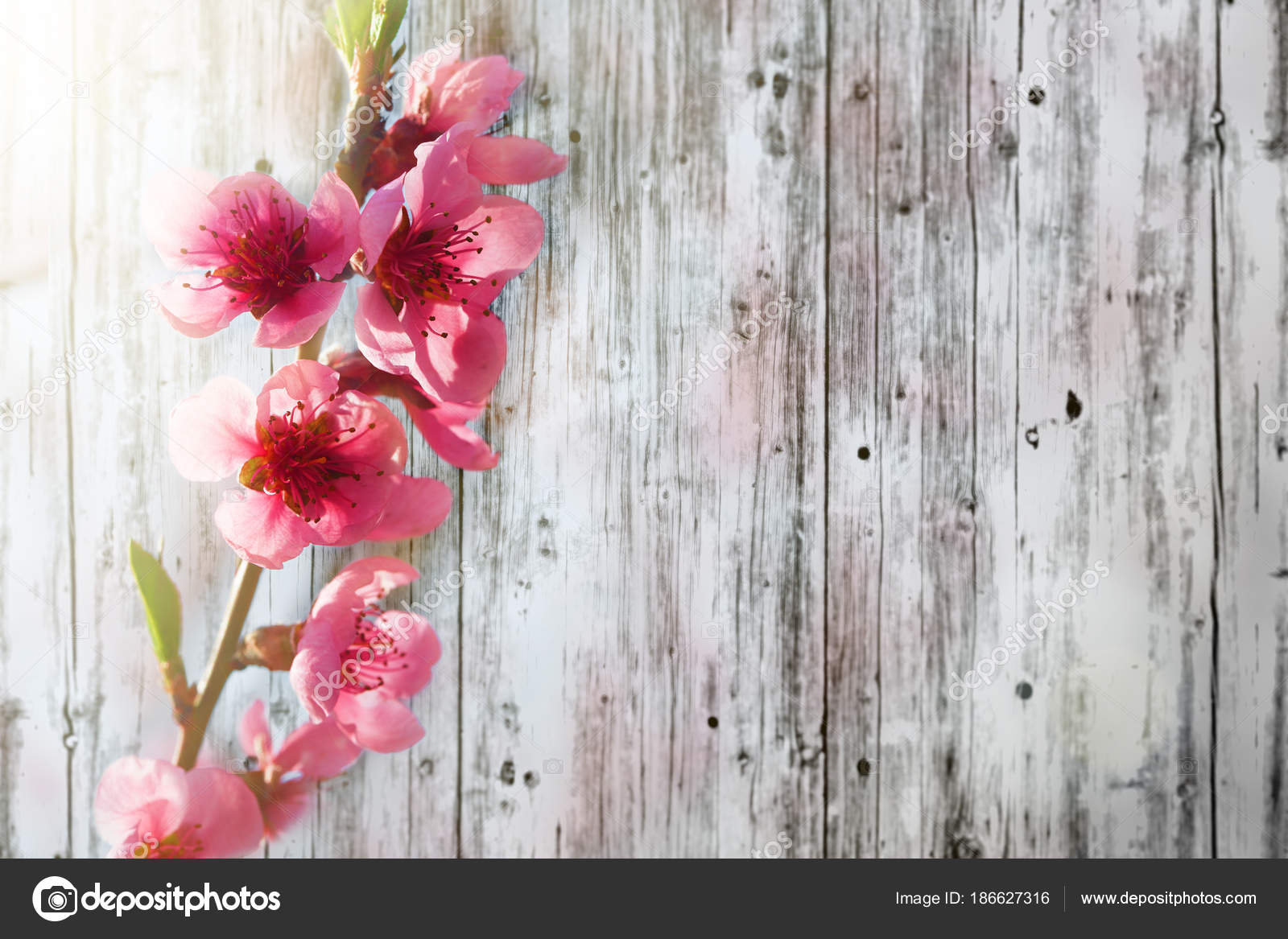 A Spring Pink Flowers Backgrounds Stock Photo Vovan13 186627316