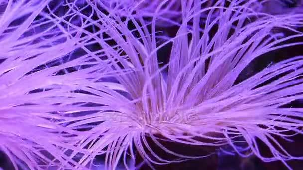Korály v podvodní tropické moře