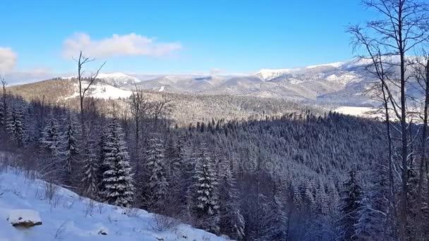 Scenic zimní panorama Karpaty s zasněžené vrcholky, extrémní terén sjezdovky a borového dřeva lesa na Ukrajině
