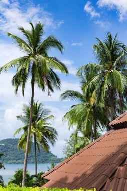 Bungalows in a tropical beach