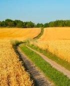 Silnice v pšeničné pole při západu slunce