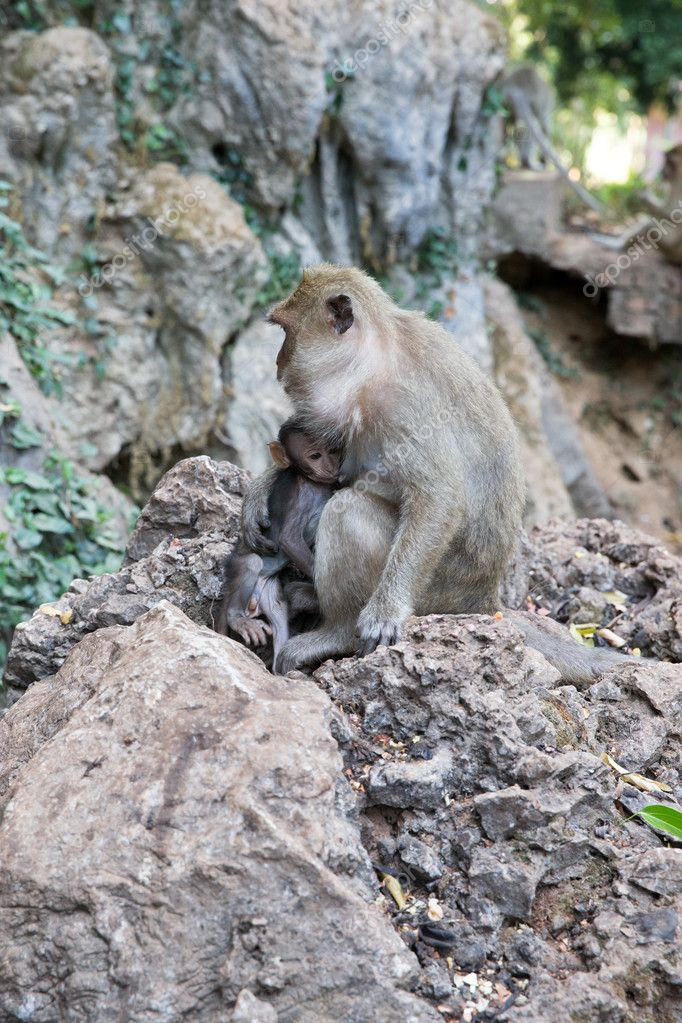 Mother monkey with baby monkey