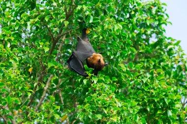 Bat hanging on a tree branch