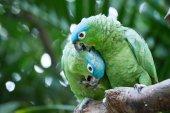 Papoušek seděl na větvi