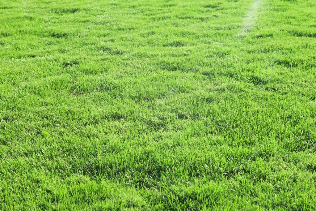 Grass on green lawn