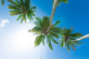Palm trees on background