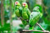 bright parrot birds