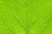 Fotografie structure of green leaf