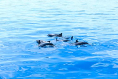 aquatic happy dolphins