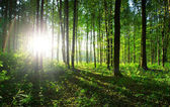 Příroda, zelené pozadí