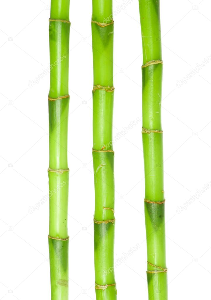 green bamboo isolated