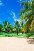 Fotografie Strand und tropischen Meer