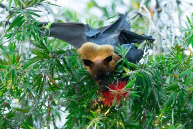 Bat hanging on tree branch