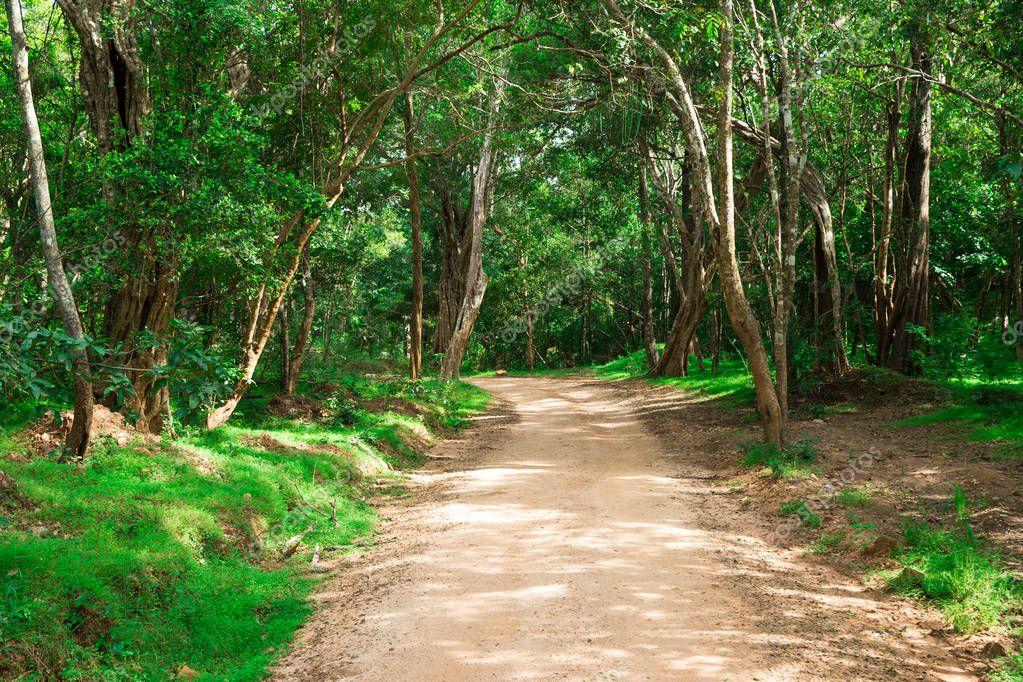 Фотообои Дорога в волшебный темный лес