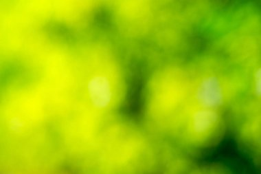 Natural green blurred light background
