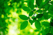 Fotografie zelené listy pozadí ve slunečný den