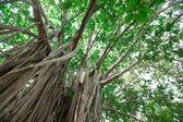 Fotografie Zelený strom s větvemi a listy