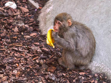 The image of monkey