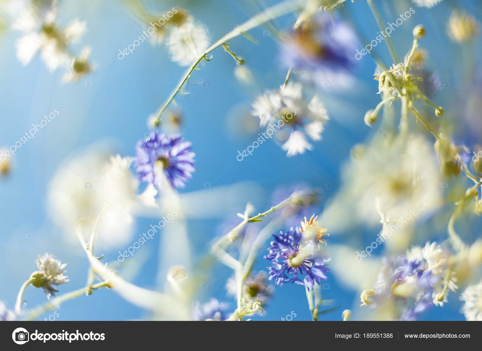 Beautiful flower background amazing view of flowers blooming in the beautiful flower background amazing view of flowers blooming in the garden at the middle of izmirmasajfo