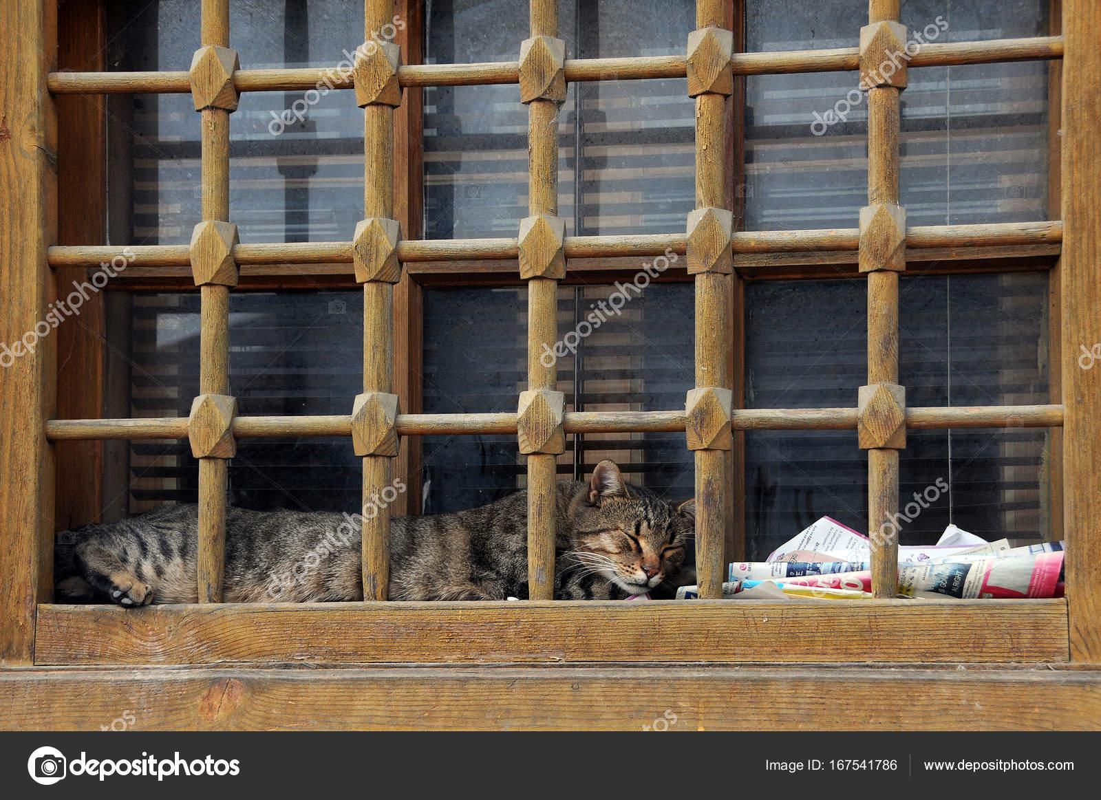 Katze Auf Der Fensterbank In Veliko Tarnovo Stockfoto