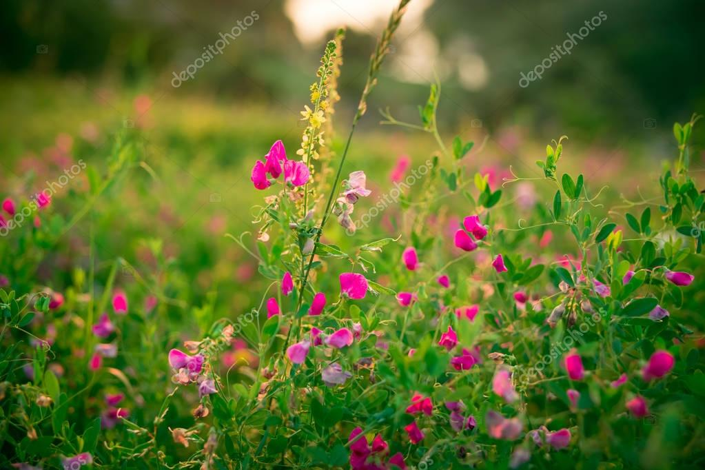 meadow with pink wildflowers