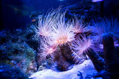 Beautiful live corals on seabed