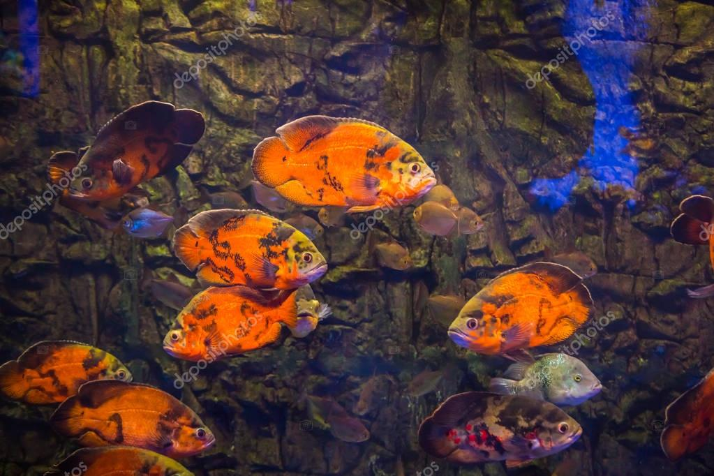 Tropical fishes with corals