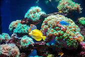 Fotografie tropický motýl ryby a korály