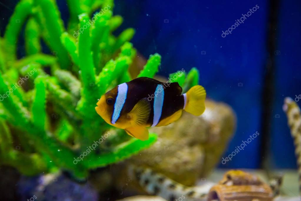 Tropical fish with corals and algae