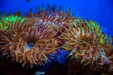 Beautiful live corals
