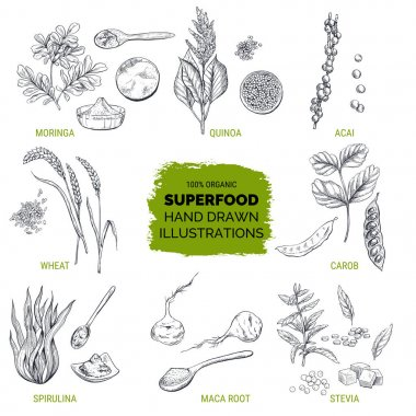 Superfood, hand drawn sketch