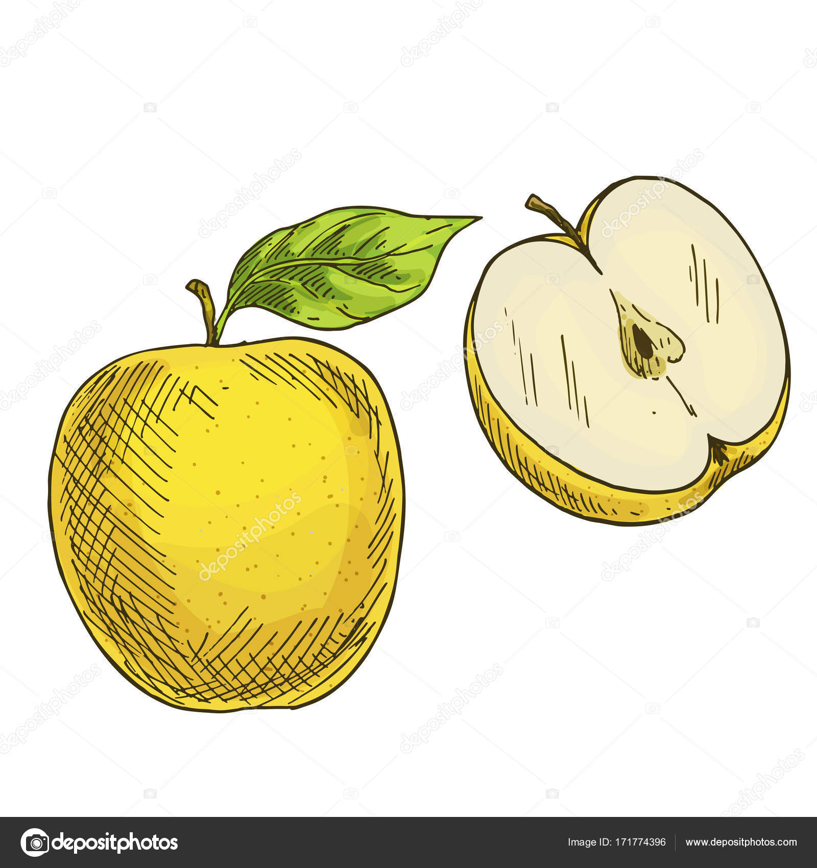 Manzana amarilla con hojas, la mitad de la manzana. Dibujo realista ...