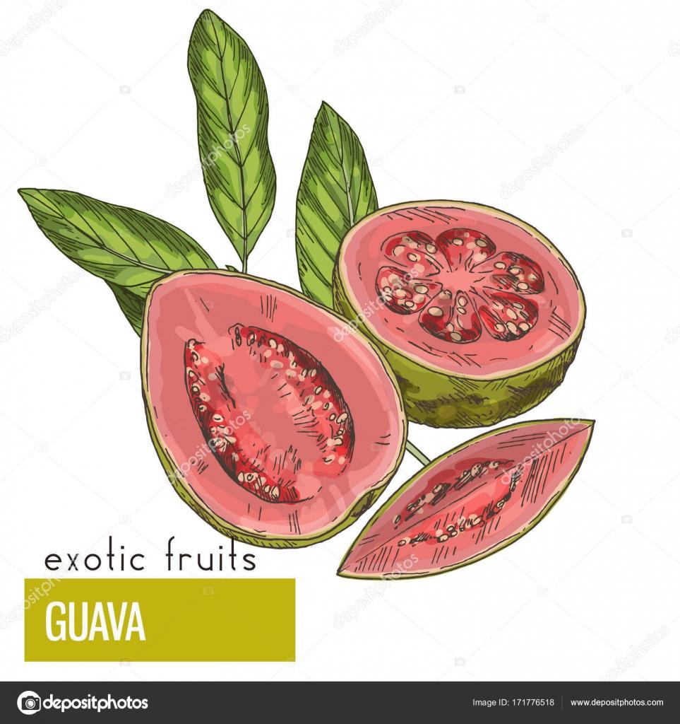 Imágenes Guayabas Animadas Para Colorear Guayaba Fruta