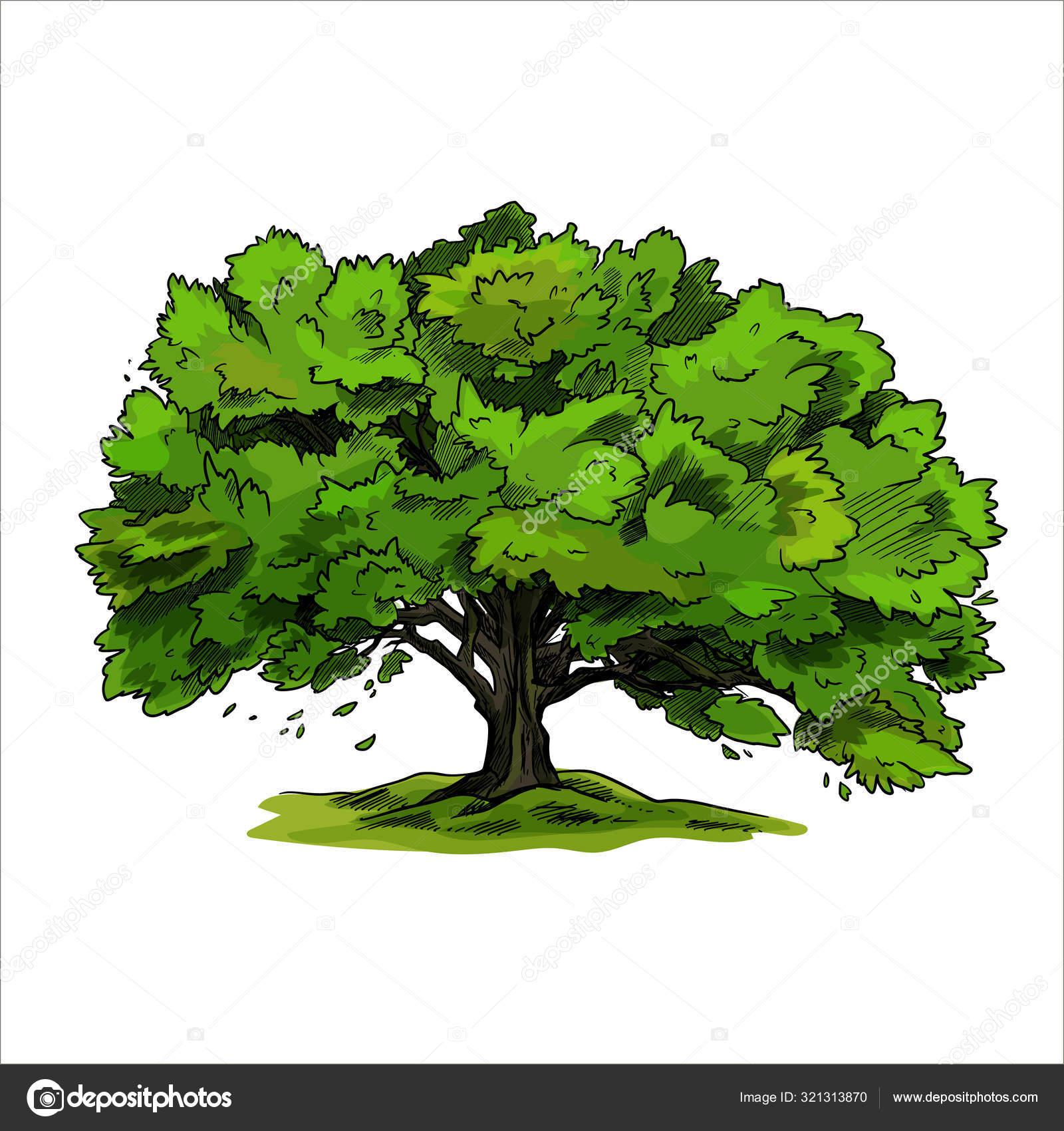 дерево с зелеными семенами