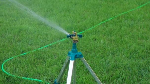 Slomo Head Of Garden Sprinkler Working Copy Space On Grass